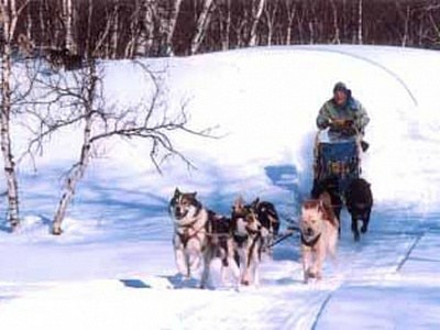 Dog sledding in Kamchatka
